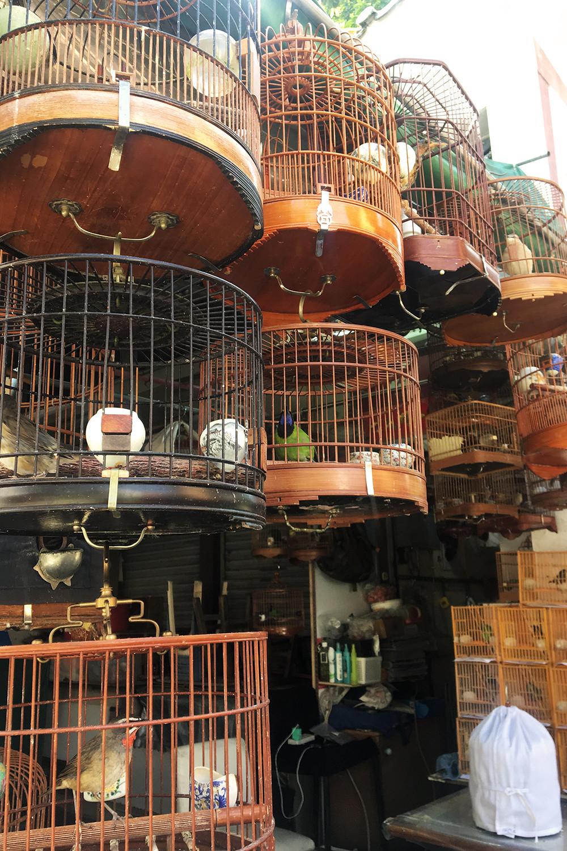 25hongkong-yuenpo-birdmarket-travel
