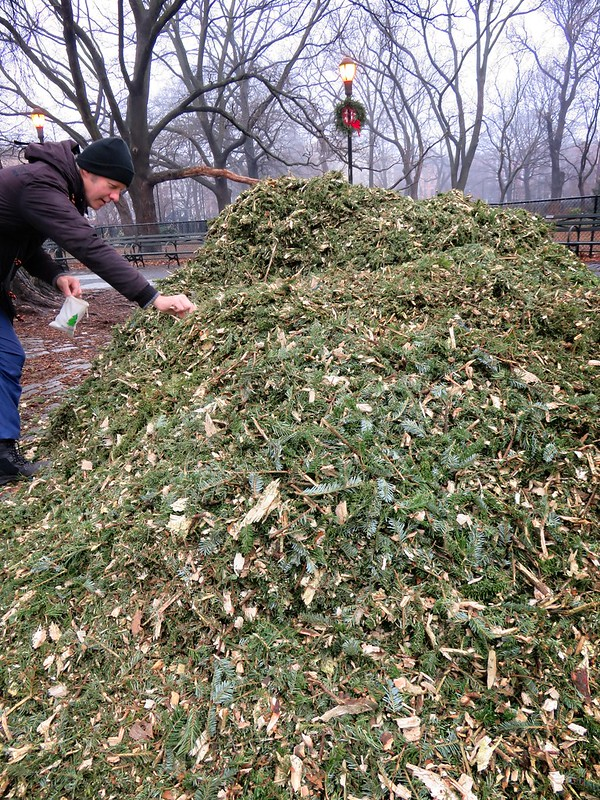Digging in to the mulch pile at Mulchfest 2020 in Tompkins Square