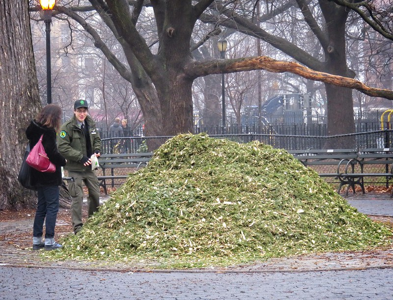 Enjoying the mulch pile at Mulchfest 2020 in Tompkins Square