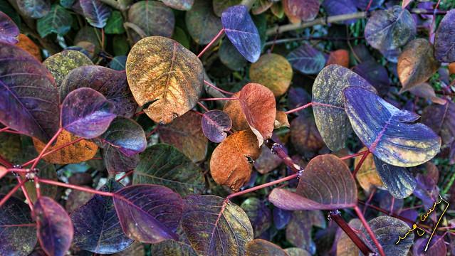 dead leaves are memories of love