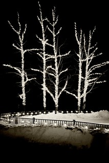 Lighted trees, Whistler Olympic Plaza
