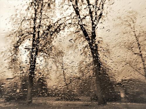blackandwhite sepia eugene rain park trees
