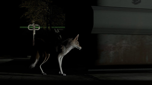 Coyote behind the Gein