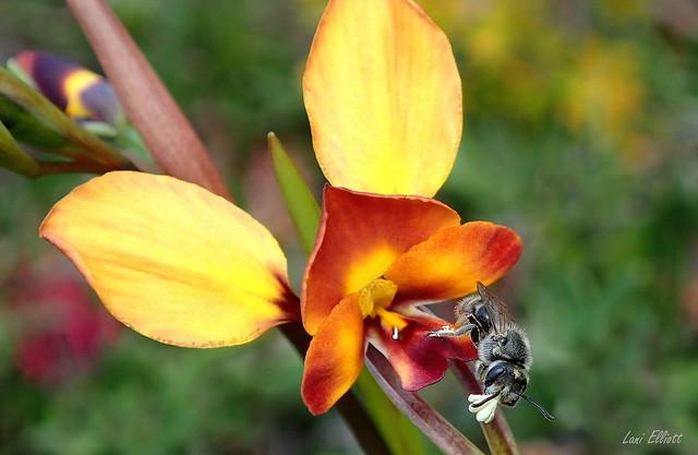 Remembering the Flora and Fauna on KANGAROO ISLAND