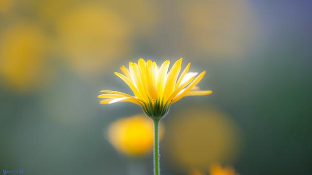 Flower - 7943