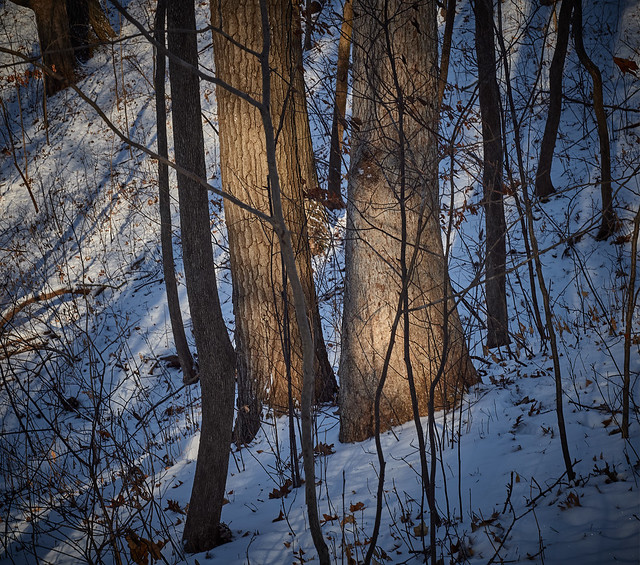 with trees, between branches and leaves, Somers, WI, 1-1-20