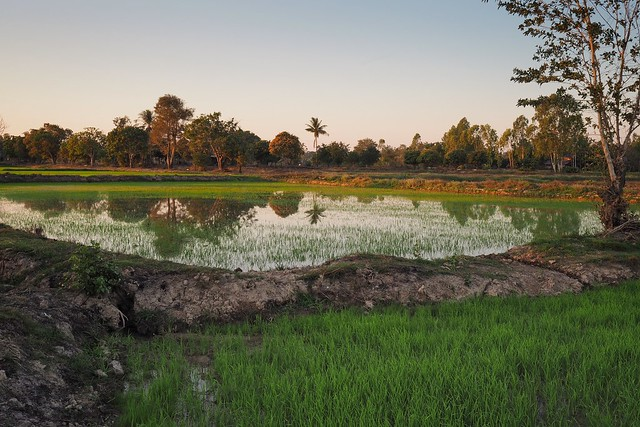 Reflections on the rice field