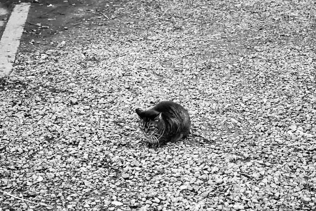 Today's Cat@2020-01-07