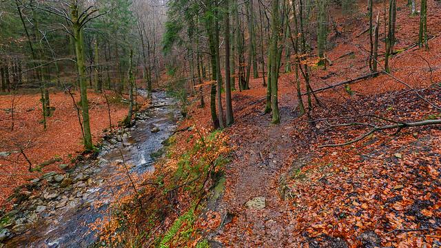 Getzbach @ Ardennes