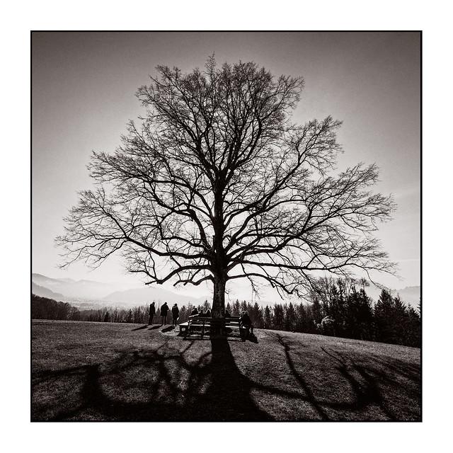 A magic tree