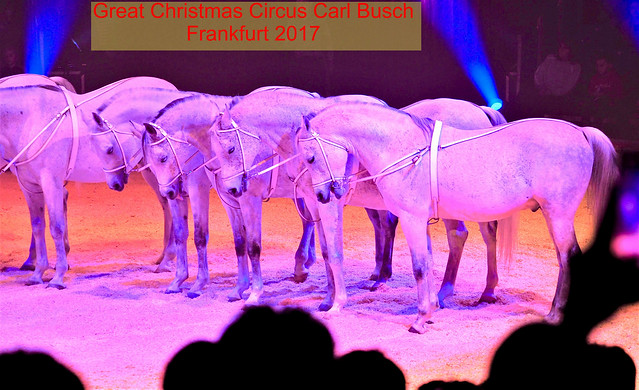 Arabian Horses in a Circus Show in Frankfurt am Main, Germany 2020