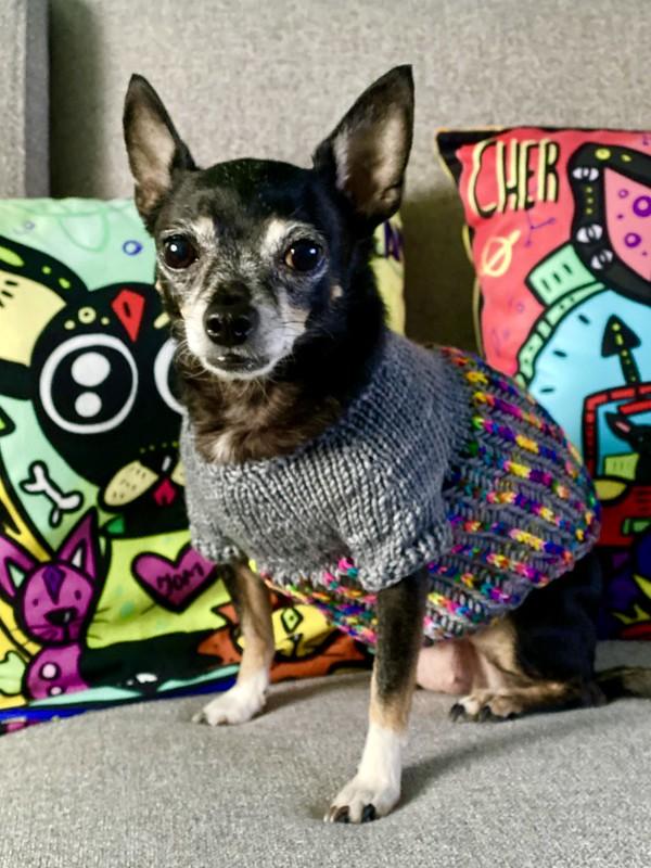 Jellybean's Little Linus sweater