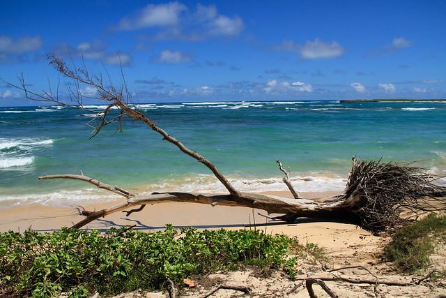 Beach, Oahu HI