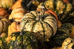 pumpkin-autumn-pumpkins-vegetables
