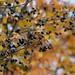 amarelo-bagas-frutinhas-860834