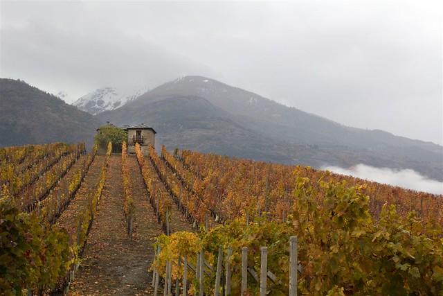 4 Novembre2018 - Val d'Aosta, Aymaville,  Coteau de la Tour