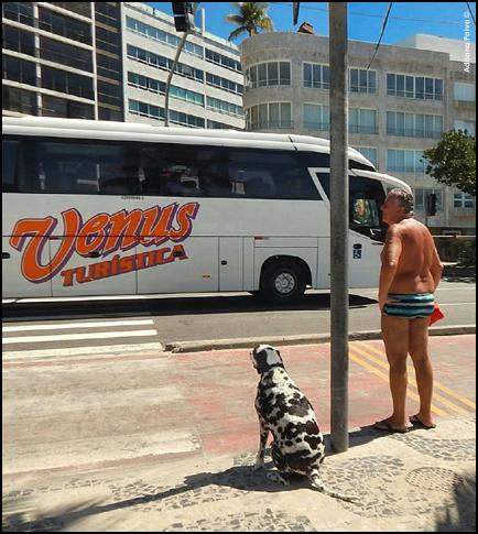 blog da jornalista Adriana Paiva carioca lifestyle inu-san dog dogs cachorros cães de da raça dalmata dalmatas