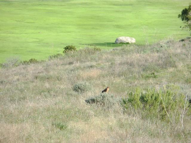 hawk from afar