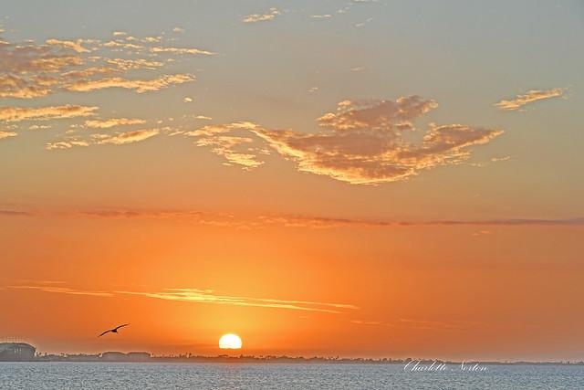 Sunset Lobo Del Mar South Padre Island, Texas