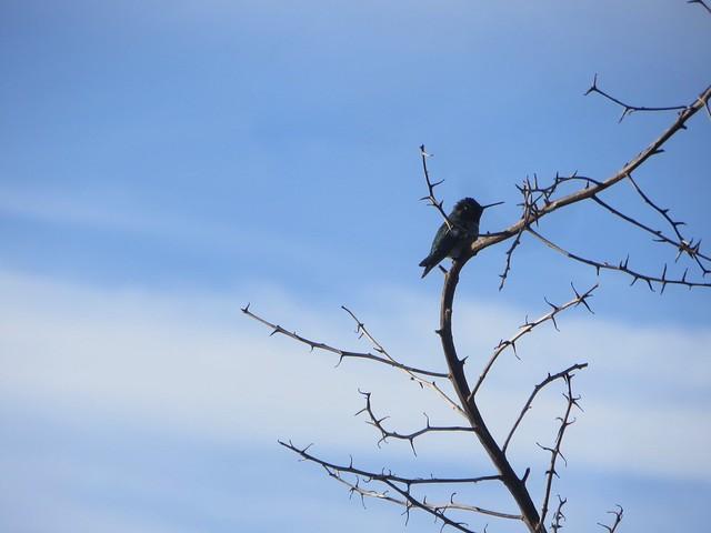 hummingbird gets warm