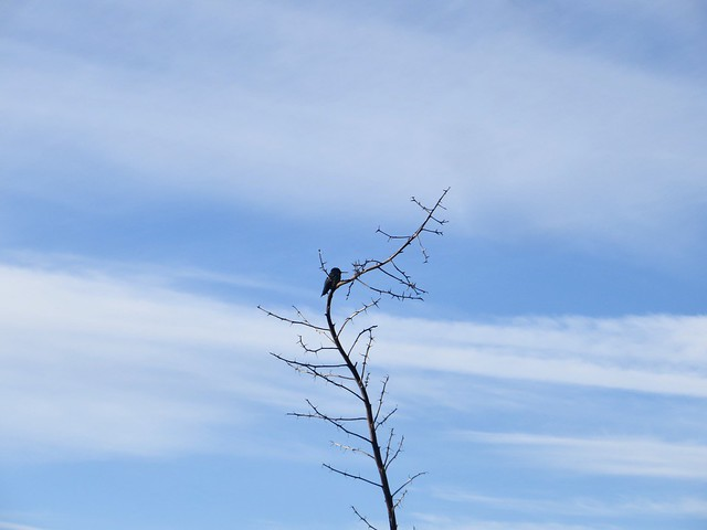 hummingbird in bluffs park
