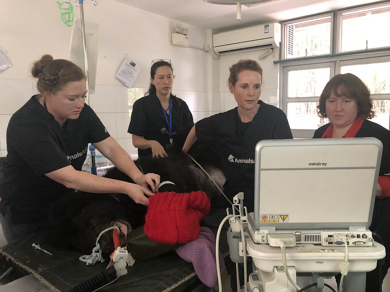 Natalie Webster (2nd from L), together with Animals Asia's Senior Vet Emily Drayton and nurses, is looking at the bear