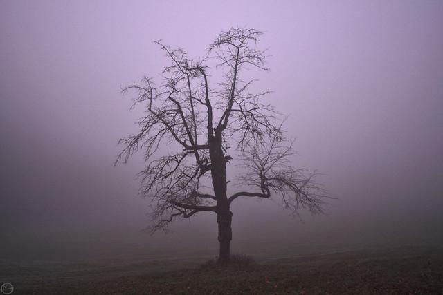 solitude tree Schönberg  2020