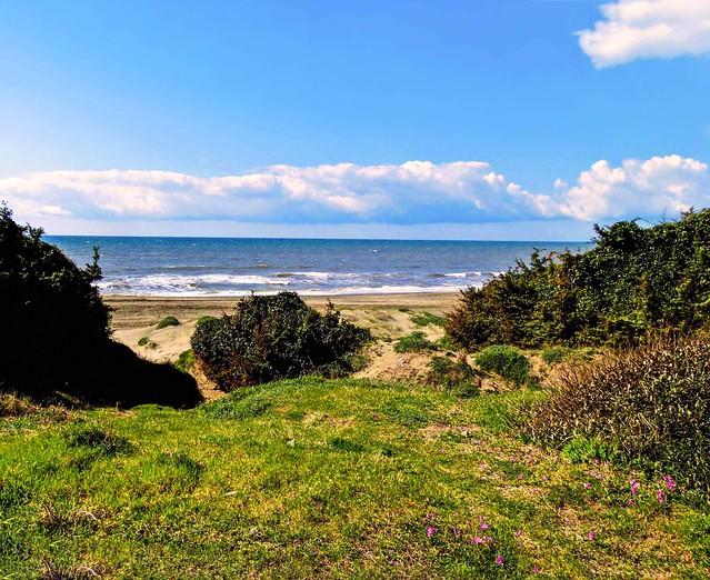 Sulle dune della costa (quasi) incontaminata