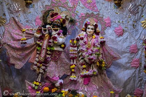 ISKCON Vrindavan Deity Darshan 08 Jan 2020