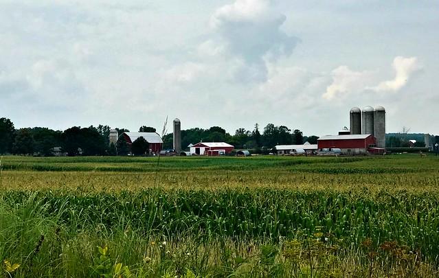 A Fine Farm
