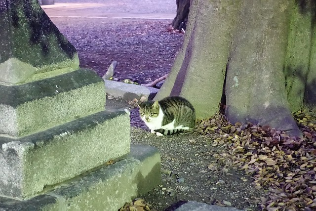 Today's Cat@2020-01-08