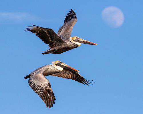 outdoor seaside dennis adair shore sea sky water nature wildlife 7dm2 7d ii ef100400mm canon florida bird