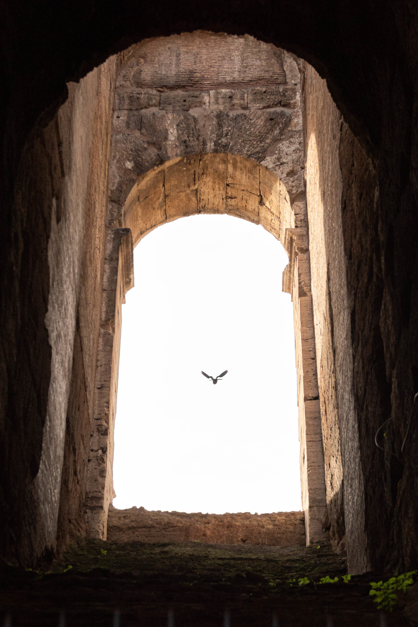 Flying Through the Colosseum