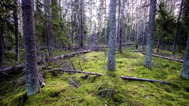 Rörstrand old Forest 🌴