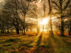Sunlight through the trees - Bushy Park