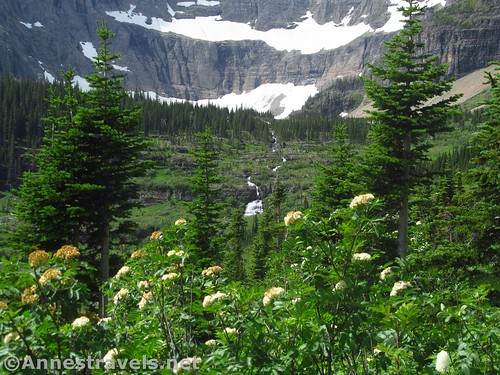 Wildflowers and waterfalls in the Iceberg Lake Outlet