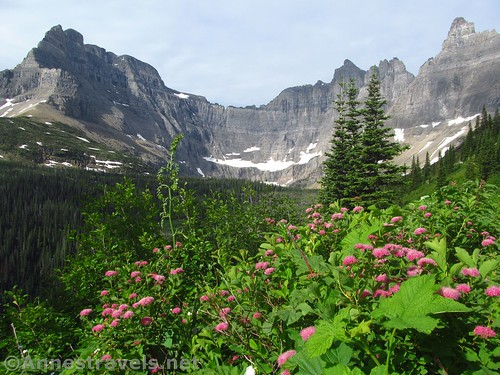 Subalpine Spiraea along the Iceberg Lake Trail below Mount Wilber and the Ice Wall, Glacier National Park, Montana