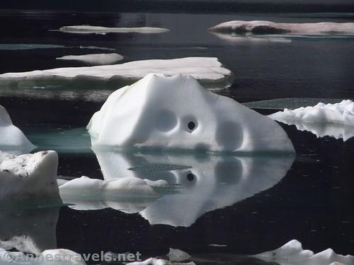 One of my favorite icebergs in Iceberg Lake, Glacier National Park, Montana