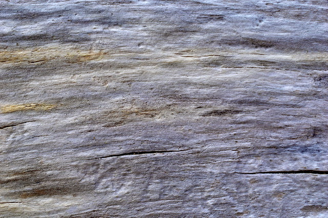 Weathered wood, Tautuku Beach