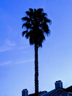 Filter Palm Tree