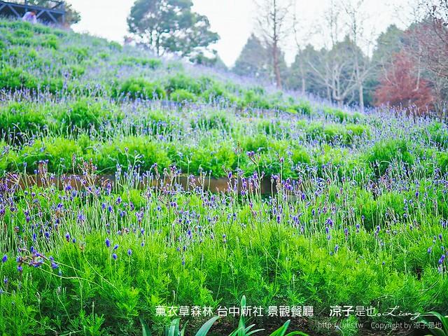 薰衣草森林