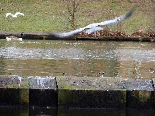 Chasing the Gulls