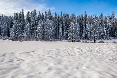 solemn trees d850 landscape winter serious snow quiet california sprucetrees field yosemitenationalpark unitedstatesofamerica