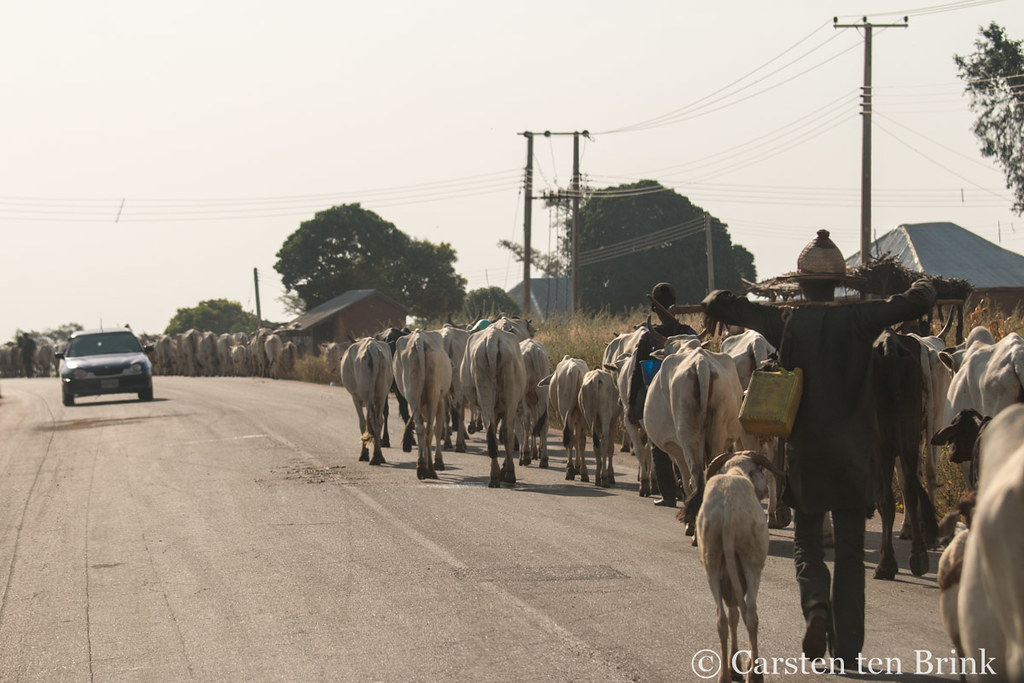 Sharing the road with the Fulani and their animals