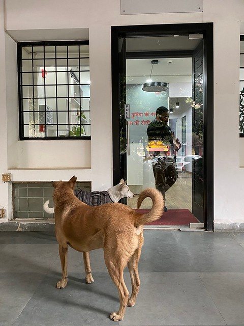 City Life - Two Dogs, Zamrudpur Community Center