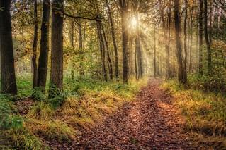 A path in Tillegem wood