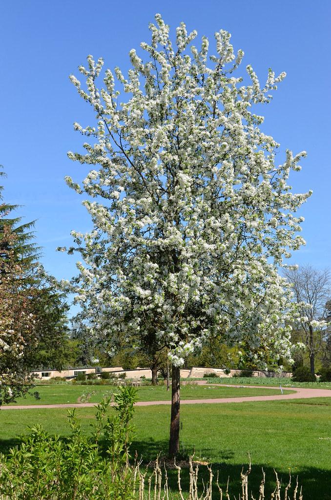 Orléans (Loiret) - Parc floral de la Source - Printemps