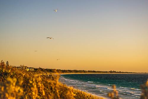 52in2020 abeautifullandscape 3 landscape sunset westernaustralia goldenhour nikondf sigma70mmmacro outdoors