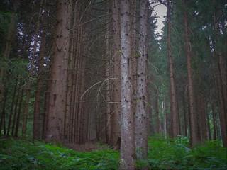 rumori di notte nel bosco