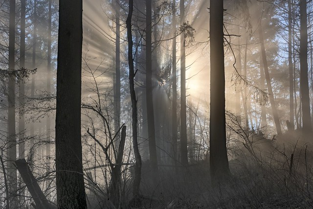*mystical winter forest*